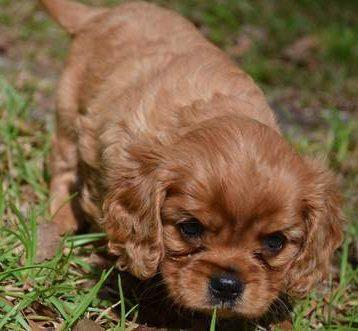 PuppyFind.com,778994